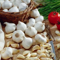 Knoblauch Cledor, weißer französischer