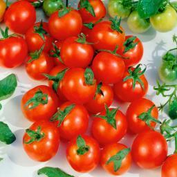 Tomatensamen Siderno