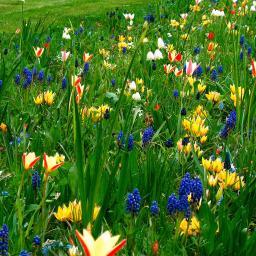 Blumenzwiebel-Mischung Bunte Frühlingswiese