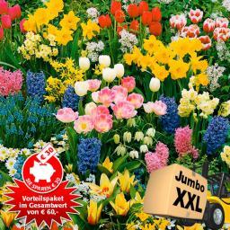 Blumenzwiebel-Vorteilspaket Jumbo XXL