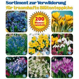Sortiment zur Verwilderung, 200 Blumenzwiebeln