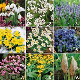 Gärtner Pötschkes Blumenzwiebel-Sortiment für den Schatten