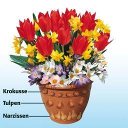 Blumenzwiebel-Sortiment Topf-Set 6 Wochen bunte Blumenfreude