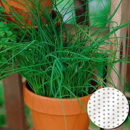 Saatscheiben Schnittlauch Twiggy 10 cm Durchmesser