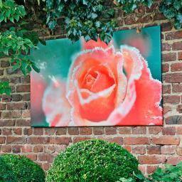 Gartengemälde Rosenblüten 80x140 cm