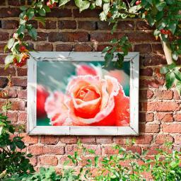 Gartengemälde Rosenblüte im Rahmen 60x80 cm