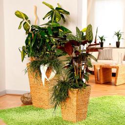 Pflanzsäulen Komfort, 2er-Set inkl. Bewässerungssystem