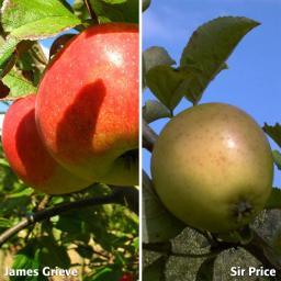 Duo-Apfel Sir Prize - James Grieve, 2-jährig