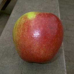 Apfel-Halbstamm Retina, 2-jährig