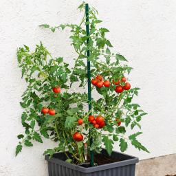 Tomatenstab für Aqua Top