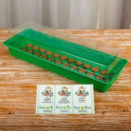 Salat-Gurke Anzucht-Set