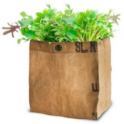 Babyleaf Salatmischung Mesclun im RAG-Pflanzbeutel