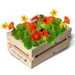 Mini-Garten-Kiste Kapuzinerkressesamen