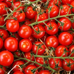 Tomatenpflanze Sweetbaby, im ca. 10,5 cm-Topf