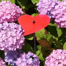 sunart® Acryl-Lichtfänger, Herz, rot
