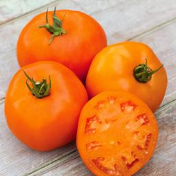 Tomatensamen Orange Slice F1