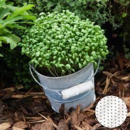 Saatscheiben Kresse, 10 cm Durchmesser