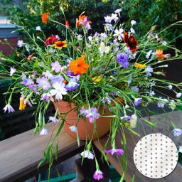 Saatscheiben Mini-Blütenteppich, 20 cm Durchmesser