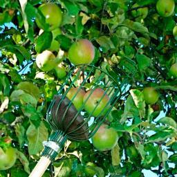 Apfelpflücker