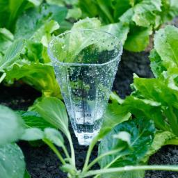 Regenmesser mit Erdspieß
