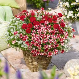 Confetti Garden™ Glossy Strawberry