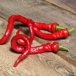Paprikapflanze Milder Spiral Chili