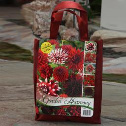 Blumenzwiebel-Sortiment Rotes Dahlien-Beet