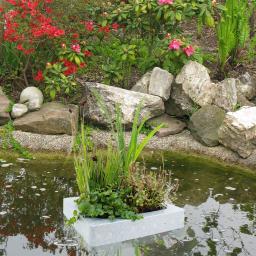 Schwimminsel mit Wasserpflanzen