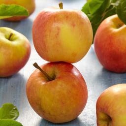 Apfel James Grieve, dreijährig