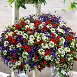 Mini-Jungpflanzen-Sortiment Pride of Britain