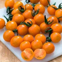 Mini-Jungpflanze Tomate Orange Paruche, veredelt