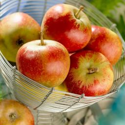 Apfel Falstaff