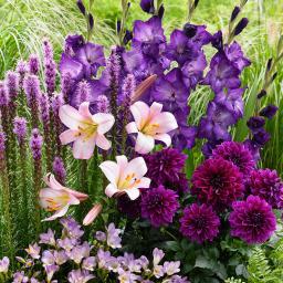 Blumenzwiebel-Set Blau-Violetter Sommer