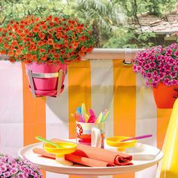 Mini-Petunie Colibri™ Orange