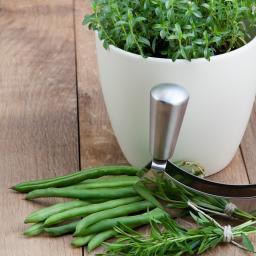 BIO Kräuterpflanze Berg-Bohnenkraut