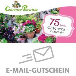 75,- Euro Online-Geschenkgutschein