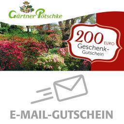 200,- Euro Online-Geschenkgutschein