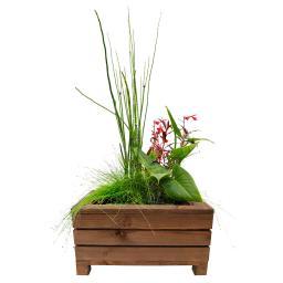Mini-Teichkiste Braun mit Wasserpflanzen