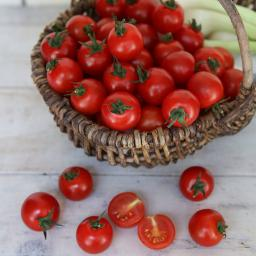 Tomatenpflanze Ready F1, veredelt, im ca. 10,5 cm-Topf