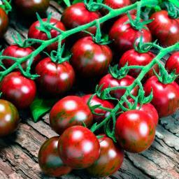 Tomatensamen Tigrino
