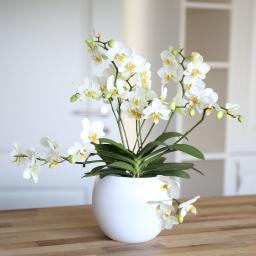 Schmetterlings- Orchidee Lausanne, inklusive Keramiktopf