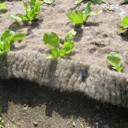 Schafwoll-Schneckenbremse