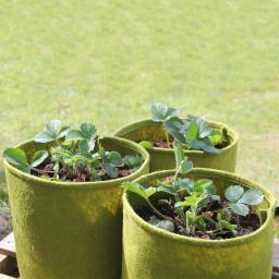 Gemüse und Kräuter Pflanztasche, 3er-Set, 3x5 Liter