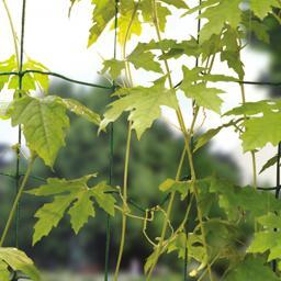 Ranknetz für Gemüsepflanzen
