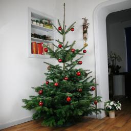 Premium Nordmanntanne 150-175 cm zu Heiligabend