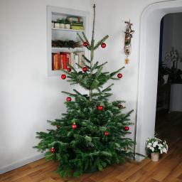 Premium Nordmanntanne 175-200 cm zu Heiligabend
