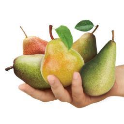 Premium Birnen-Familienbaum, im ca. 27 cm-Topf