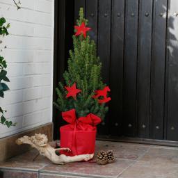 Geschmückte Zuckerhutfichte in weihnachtlicher Husse, groß