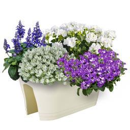 Sommerblumen-Sortiment Maritim
