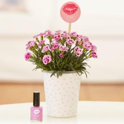 "Nelke Pink Kisses® Friendset 1 ""Think pink!"" mit exklusivem Nagellack in Pink"